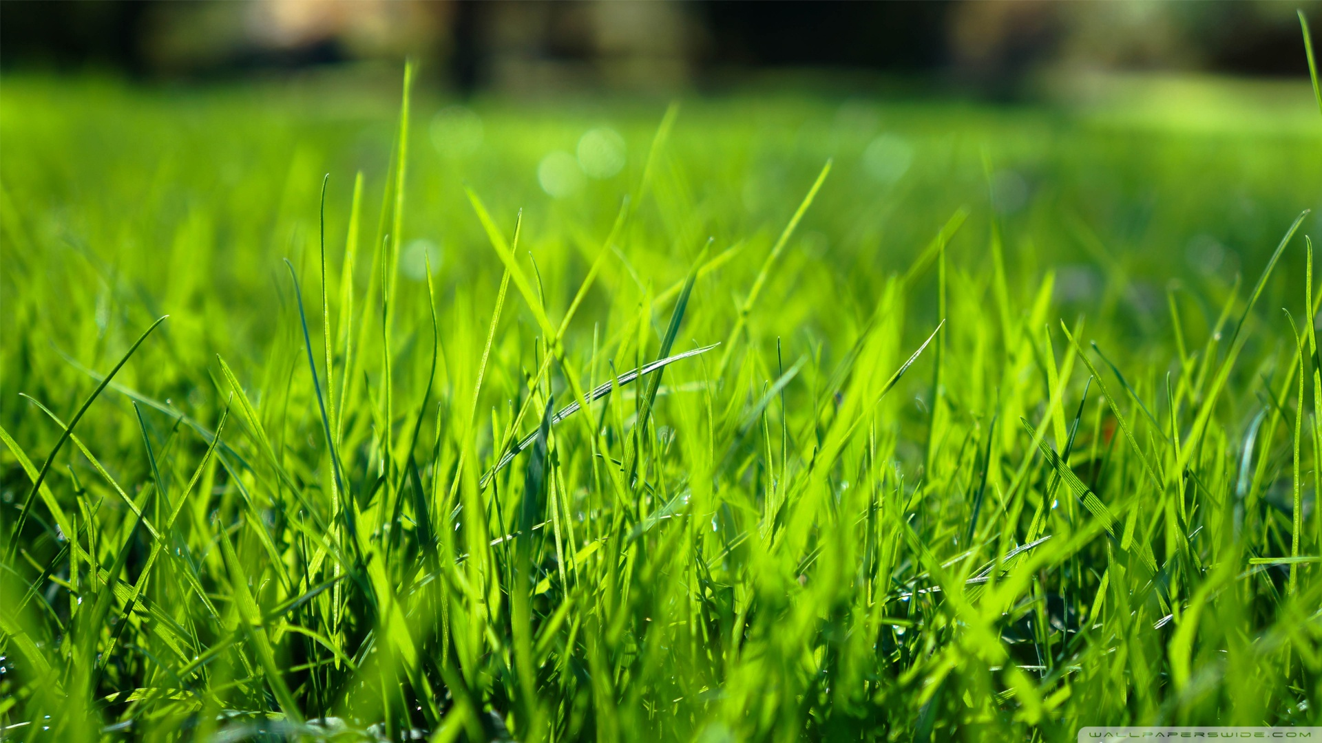 Morning Grass 5 Wallpaper 1920x1080 Greener Than Ever Lawn Care